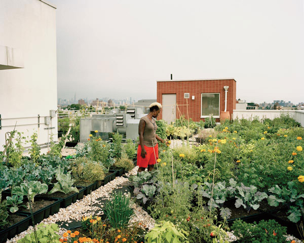 Seeds to Feed Rooftop Farm