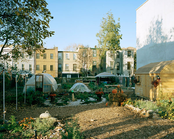 Hattie Carthan Community Garden